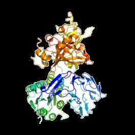 U-protein/Factor B, human, Man5-GlcNAc2 N-linked glycans/B002/100 microgram