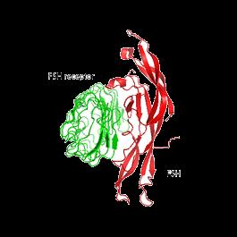 U-protein/FSH, Danio rerio/F001/100 microgram