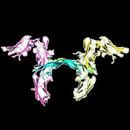 U-protein/platelet derived growth factor β, human/P001/100 microgram